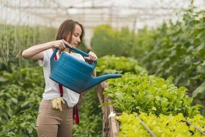 Gyógyövények termesztése