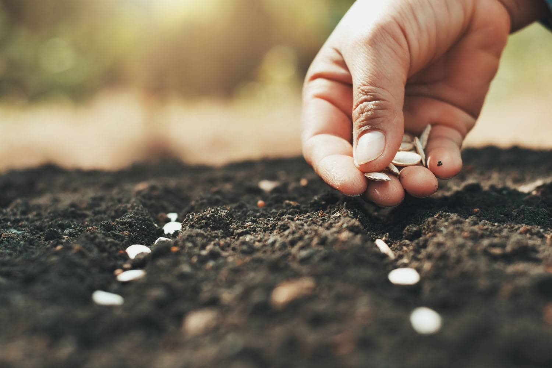 Gyógynövények termesztése