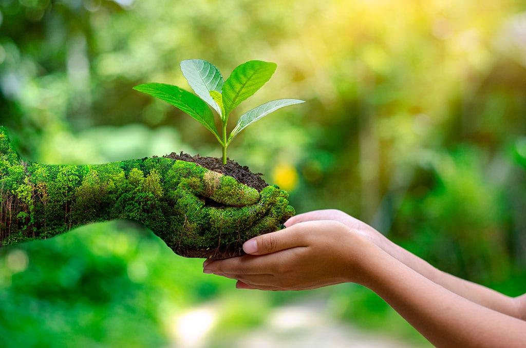 Fokozottan védett növények