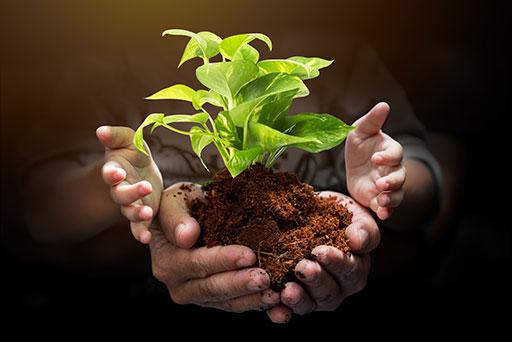 Védett növények
